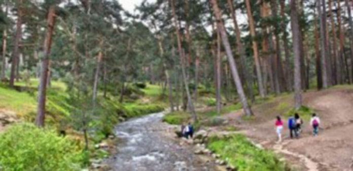 Los Montes de Valsaín son uno de los espacios naturales más ricos del centro de la península