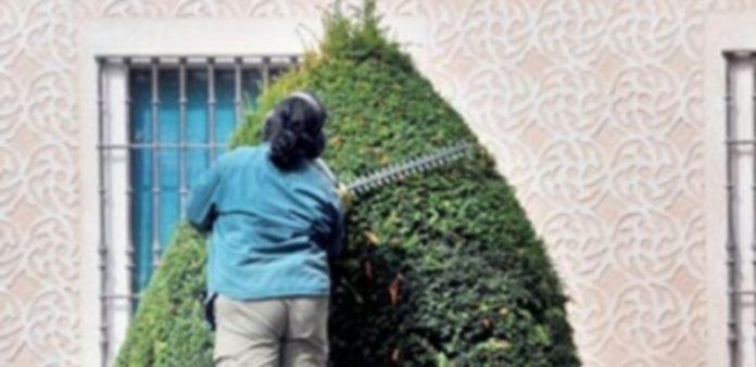 El programa de ayudas permitió la contratación de cinco peones para el servicio de Jardines. / KAMARERO
