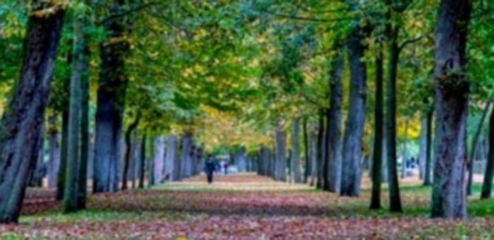 La actualización de inventariado de árboles de la ciudad incluye también las zonas de Clamores y la Alameda. / KAMARERO