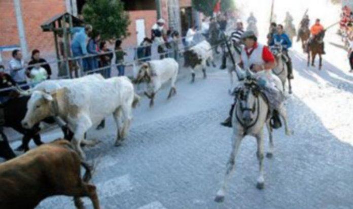 Los caballistas deberán colocar en la cabezada del caballo los distintivos. / GABRIEL GÓMEZ