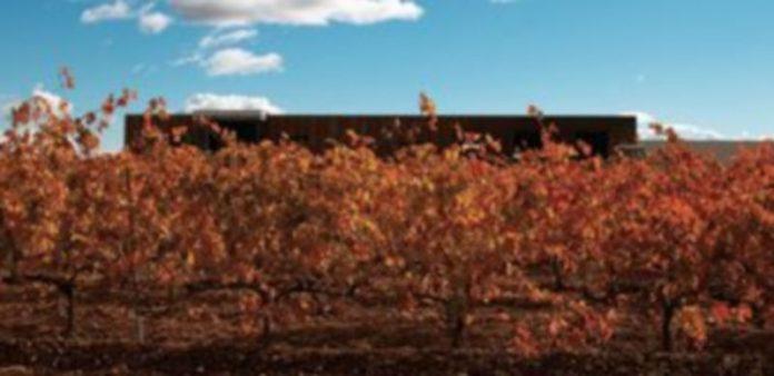 Imagen de viñedos y la bodega Leyenda del Páramo