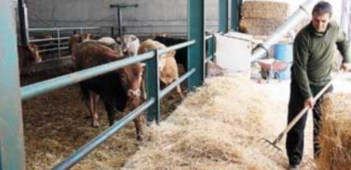 Los terneros de cebo en la provincia de Segovia tienen con mercado interior de poca actividad