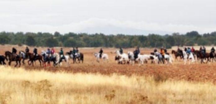 Binomios y bueyes en pleno recorrido del monte durante la trashumancia realizada desde la localidad de Boceguillas hasta Grajera. / A.M.