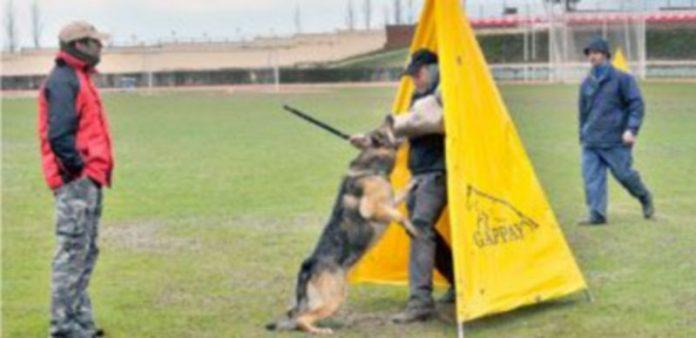 Uno de los entrenamientos previos al campeonato que se llevó a cabo ayer en la Ciudad Deportiva de La Albuera. / Kamarero