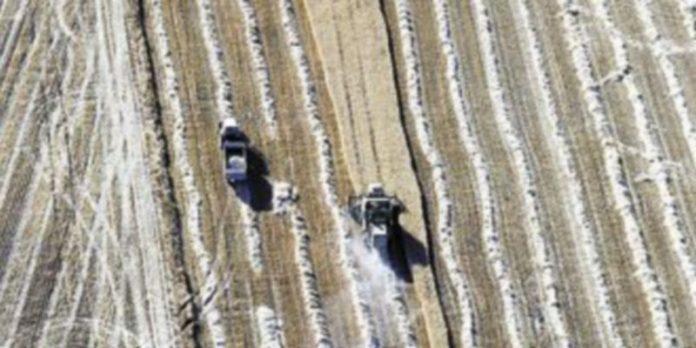 Dos agricultores cosechan en Tierra de Campos. / Ical