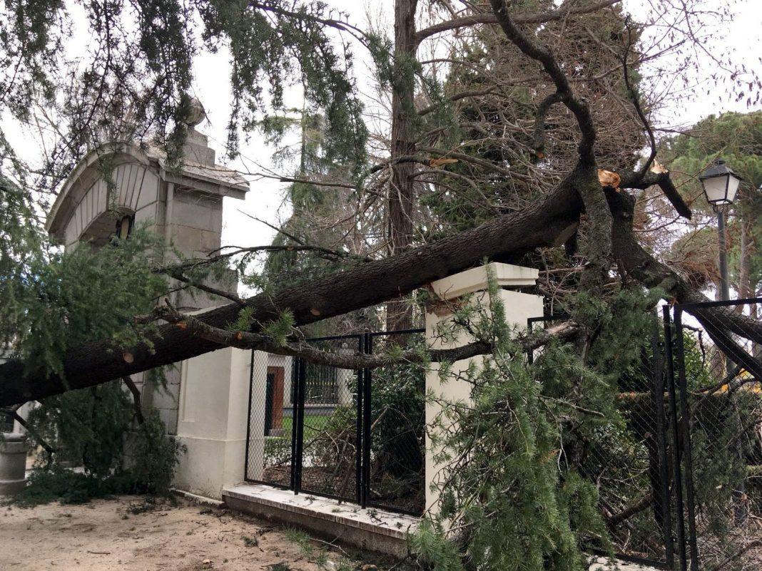 Vista del lugar en el que ayer un niño de cuatro años falleció tras caerle un árbol encima en el parque del Retiro.