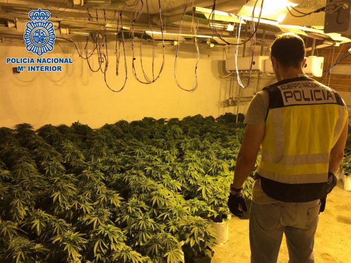 Un agente observa la plantación incautada en Almería.