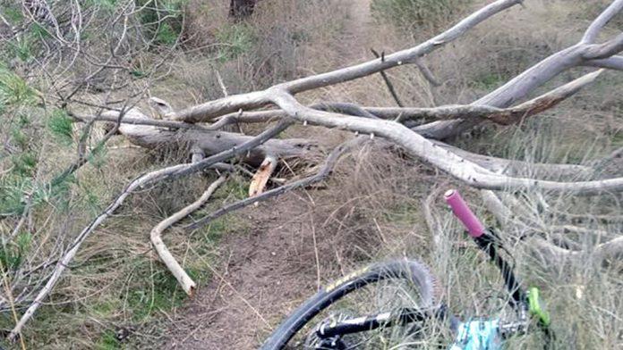 Los ciclistas se encuentran con ramas colocadas en el medio del camino por el que circulan. /el adelantado