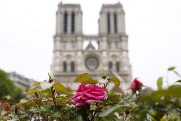 Una rosa florece ante Notre Dame de París, ayer martes, cuando los bomberos lograron apagar las últimas llamas.