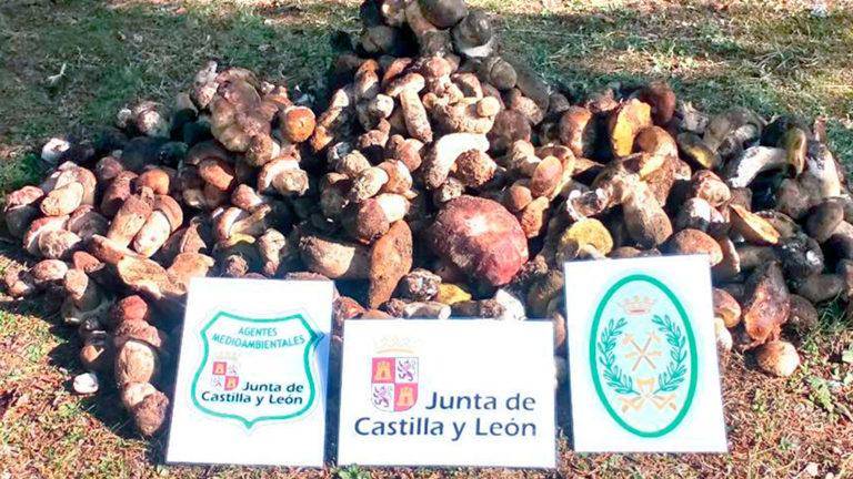 Más de 6.750 kilos de setas decomisados en Soria y 134 denuncias