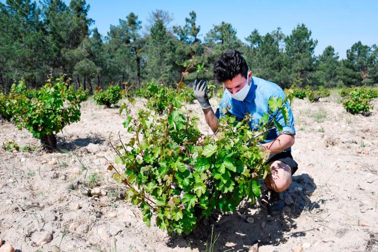 Baco de Oro para el vino segoviano Blanco Nieva Pie Franco 2020
