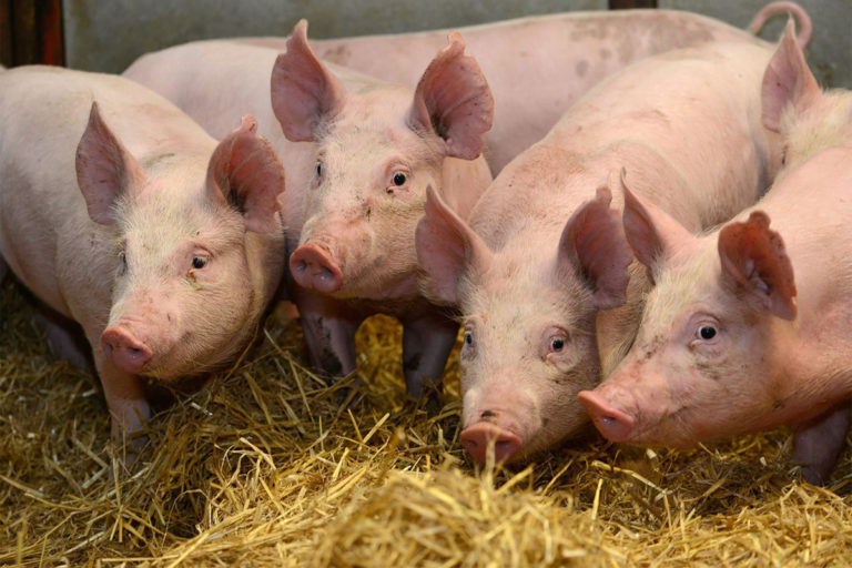 La FES respalda los proyectos ganaderos que estén reglados