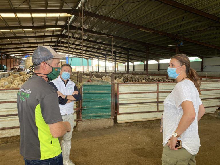 Desestacionalizar la producción de ovino, clave en el futuro del sector