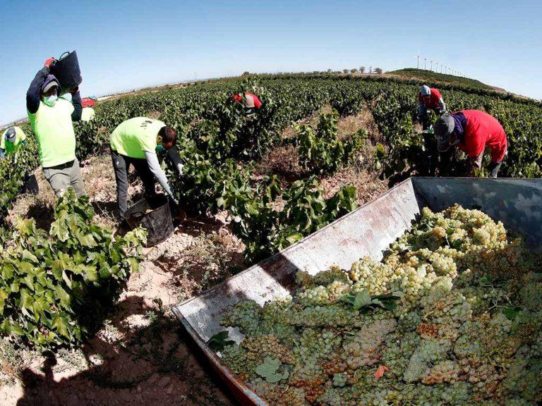 Ribera del Duero crea un protocolo contra la Covid-19 para la vendimia