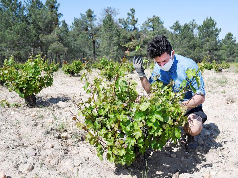 El presidente de ASAJA pide no criminalizar al sector del vino