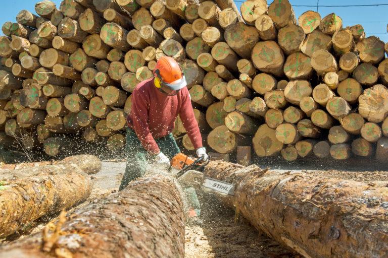 """El sector forestal demanda ser tratado como """"estratégico"""" en Castilla y León"""