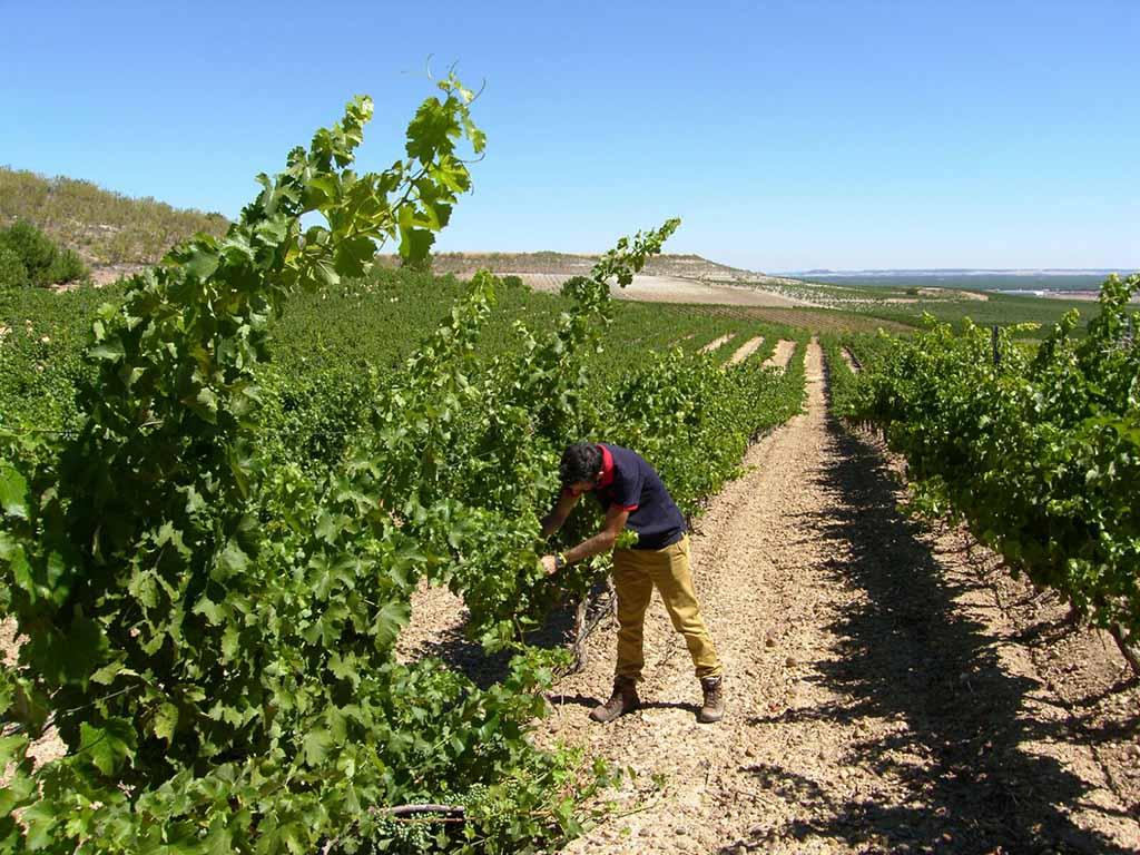 'Bodegas Cerrosol', tierra de vinos con tradición