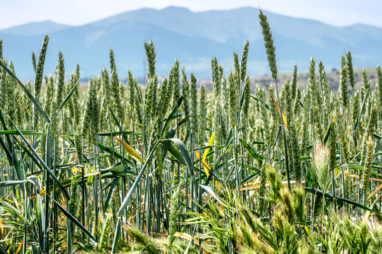 La Junta abona 4,8 millones a agricultores y ganaderos de la provincia