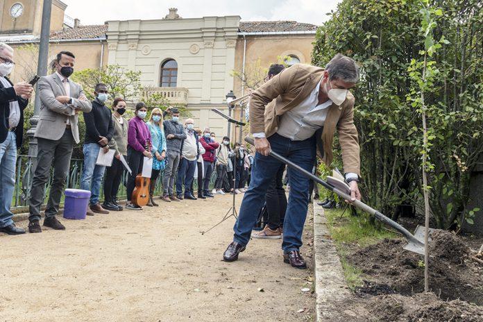 IES Mariano Quintanilla Plantacion Olmo Antonio Machado KAM0660
