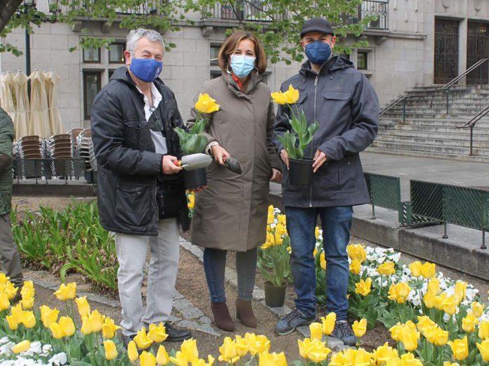 Tulipanes por el parkinson