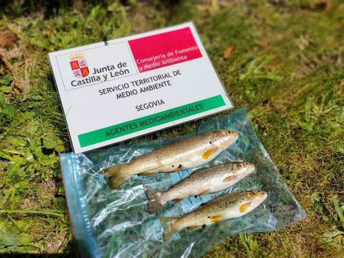 Pesca fraudulenta intervenida