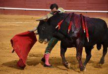 El primer toro de la tarde medía casi lo mismo que Rafaelillo