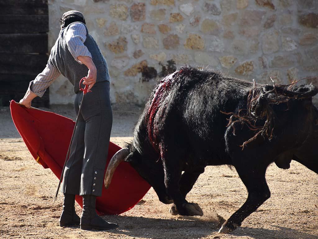 toros javier herrero al natural