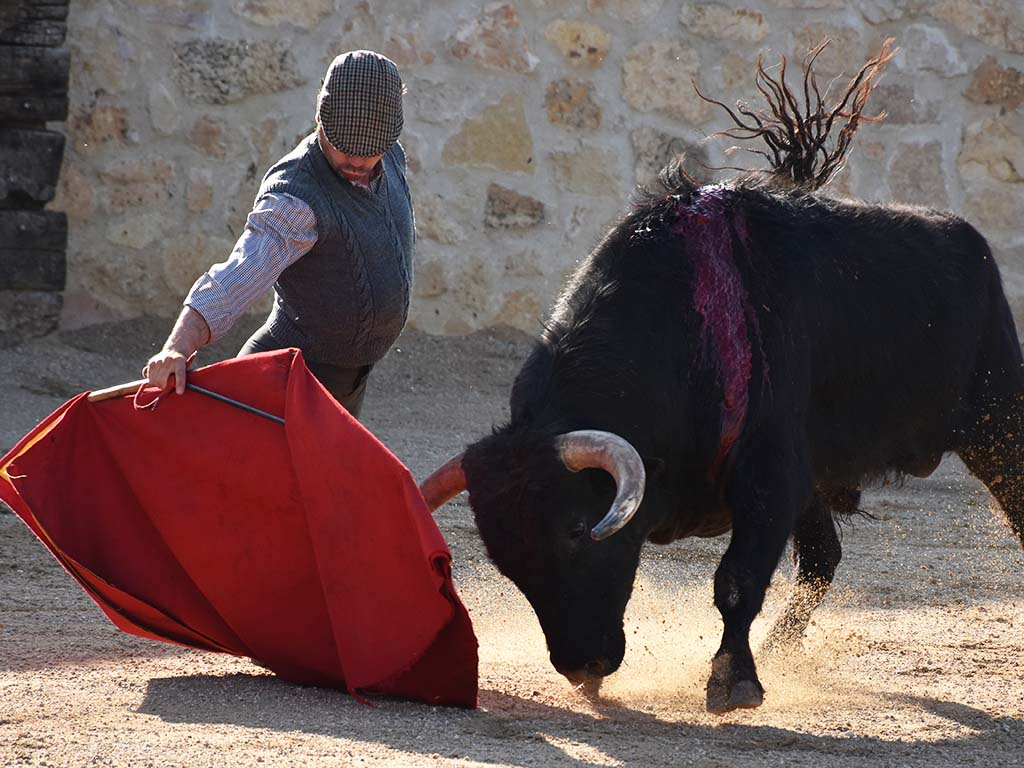 toros javier herrero tentadero los cerros